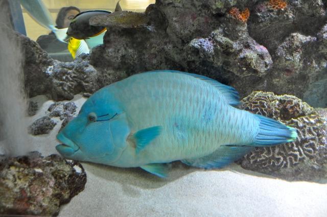 Security fish