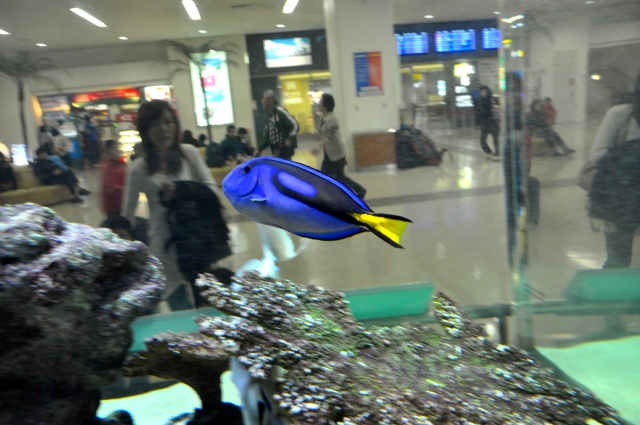 Naha is a fun airport with fish floating around