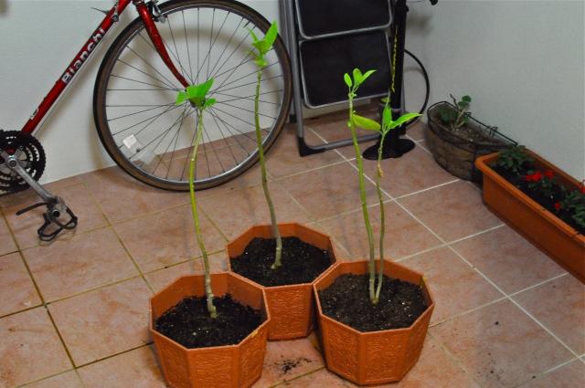 Great oaks from little acorns grow