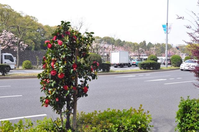 La Dame au Camelias beside a road in Tokyo