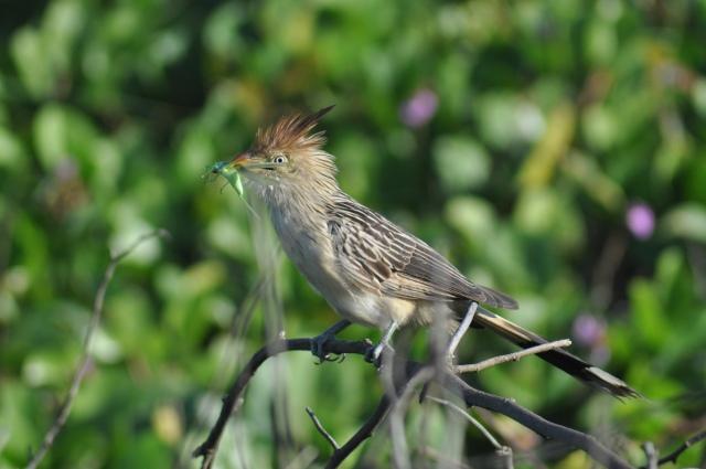 This bird looks a bit mad