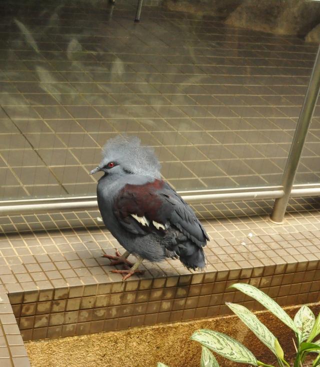 Spam bird