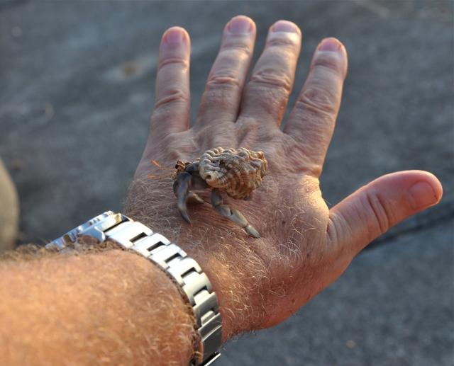 I consult a peripatetic hermit crab