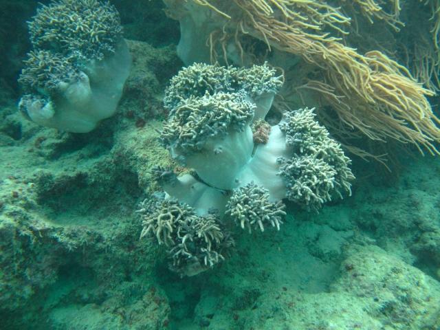 Amazing soft coral - spongey like a mushroom