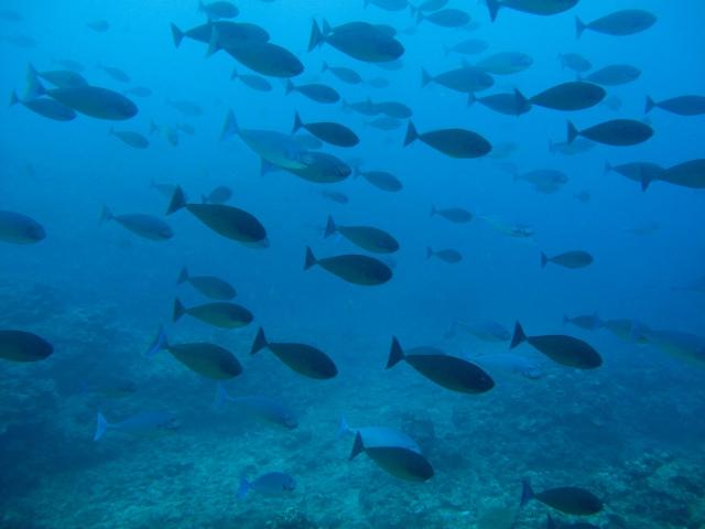 These are biggish fish who live deep.