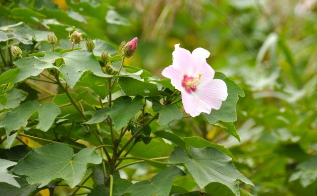 November in Okinawa