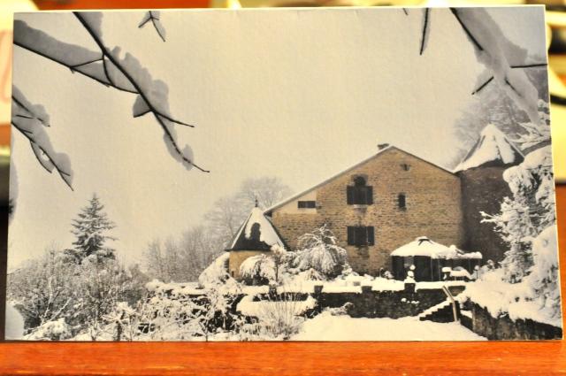 Snowy Sothonod
