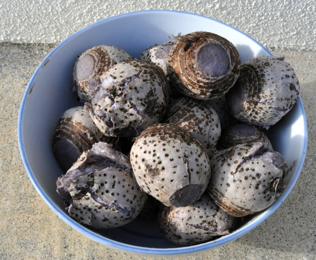 A bowl of tarot roots