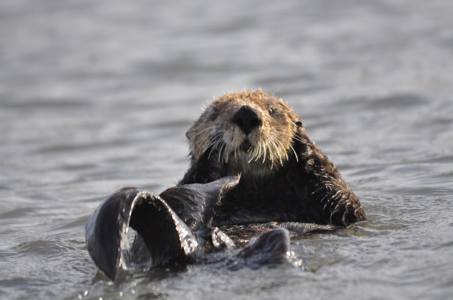A See You Jimmy Otter