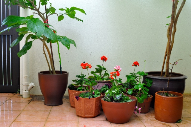 Geraniums, petunia, lobelia. Not very exotic.