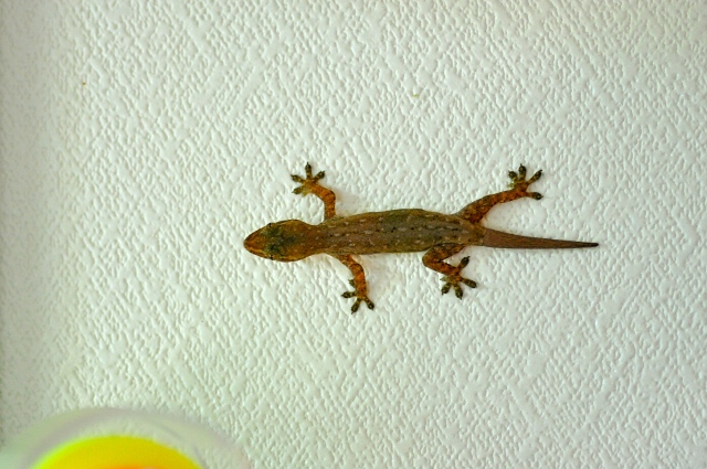 Gertrude the Gecko