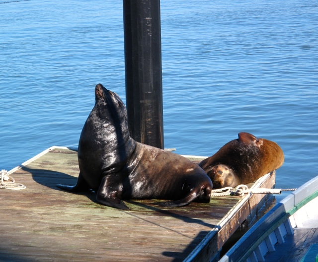 Mr and Mrs Sealion