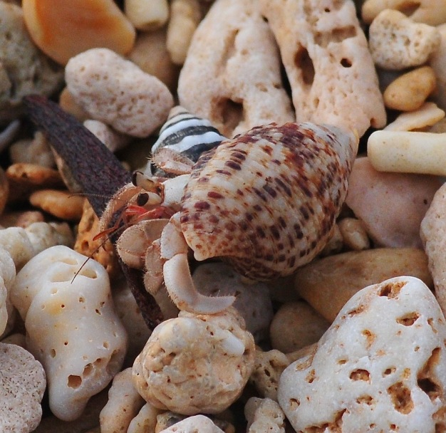 80% of the beach is made up of hermit crabs