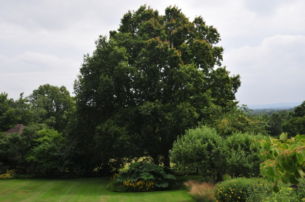 Trees and lawns